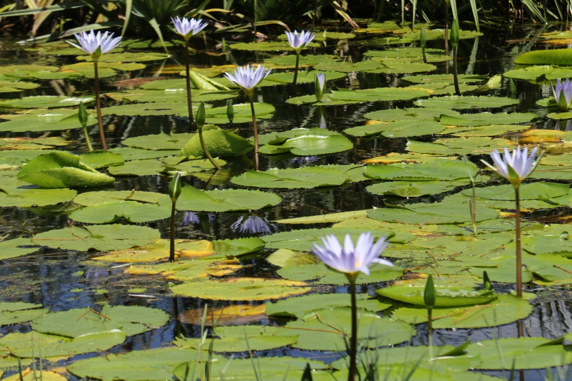 Pond life at Shannon Vineyards in the Elgin Valley South Africa.