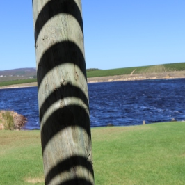 Shadows on a post which look like a tigers tale at Lomond Wines in South Africa.