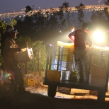 Early morning harvesting at Klein Constantia in South Africa.