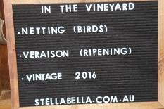 In the vineyard at Stella Bella.