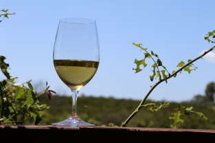 A glass of Amber Wine at Cullen Wines in Margaret River Australia.