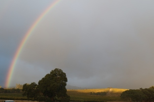 Rainbow at Pewsey Vale vineyard in the Eden Valley in Australia.