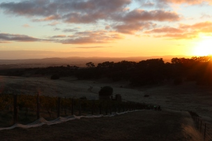 Sunrise at Grosset Gaia vineyard in Clare Valley.