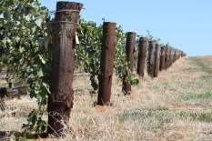 Vines at Two Hands Barossa Valley Australia.