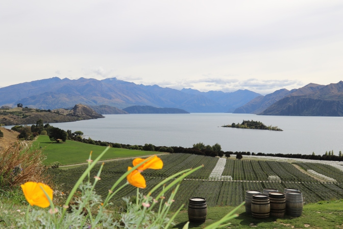 Beautiful views from the Rippon Vineyard cellar door in Wanaka New Zealand.