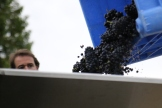 Blair Walter oversees the grapes coming in at the Felton Road winery in New Zealand.