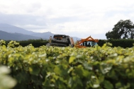 A large harvester works the vines at the Saint Clair vineyards in Marlborough New Zealand.