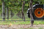 A tractor wheel in between the vines at Saint Clair in Marlborough New Zealand.