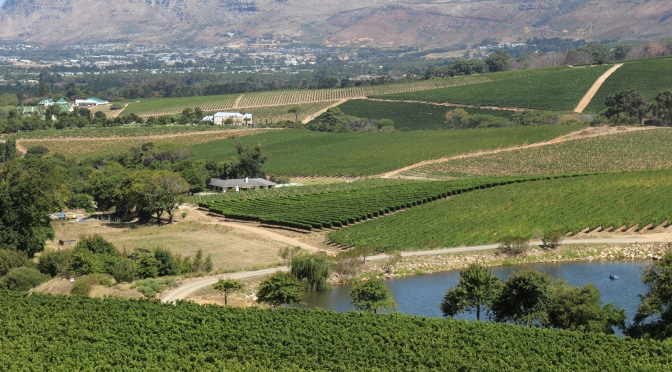 Klein Constantia vineyards in South Africa.