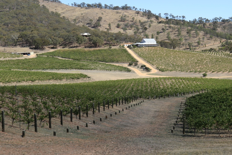 View across the vines at Dalwhinnie Wines in Australia.