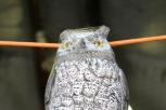 Owl at Summerfield Wines.