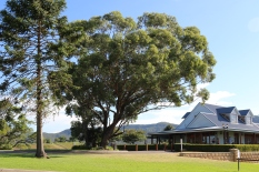 Great trees at Audrey Wilkinson in the Hunter Valley in Australia.