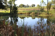 Lake at Audrey Wilkinson Wines in Hunter Valley Australia.