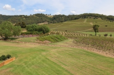 The vines at Ivanhoe in Hunter Valley Australia.