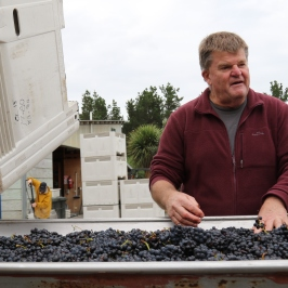 Larry McKenna of Escarpment at the sorting table in New Zealand.