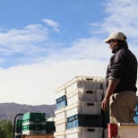A worker awaits more grapes to stack onto the lorry during the 2016 harvest at Bodega Colome. Vintage Sixteen.