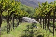 A huge rock in the vineyard at Bodega Colome in the Salta region of Argentina.