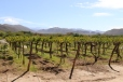 A view across the Colome vineyard in the Salta region in Argentina.