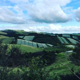 Waiheke Island vineyards in New Zealand.