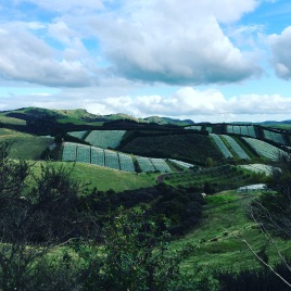 Waiheke Island vineyards in New Zealand.