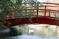 A white swan swims underneath a red bridge at Pegasus Bay in New Zealand.