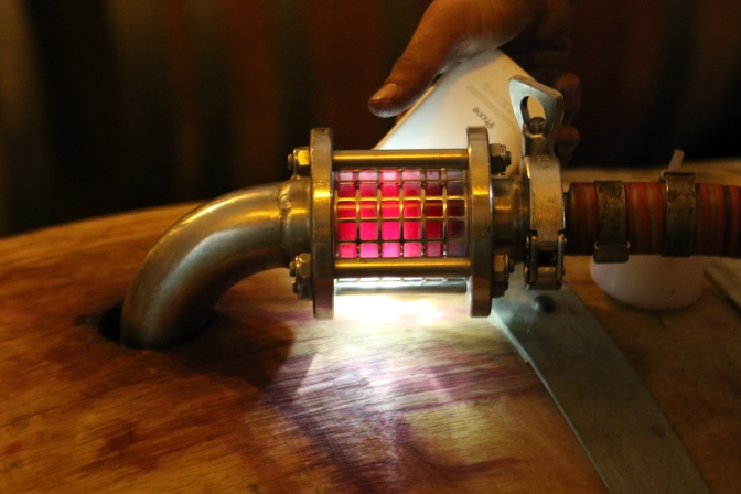 Using a smartphone torch to peep inside the wine barrel at Kingston Family Vineyards in Chile.