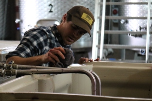 Kevin working hard in the Kingston Family Vineyards winery.