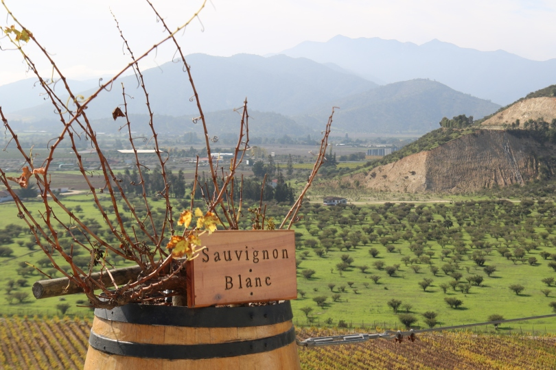 Sauvignon Blanc sign at the Indomita winery in Chile.