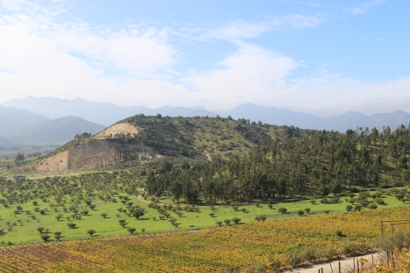 The view across the Casablanca Valley from the Indomita winery in Chile.
