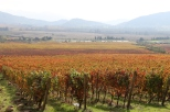 A view across the valley at the Vina Koyle vineyards at Los Lingues in Chile.