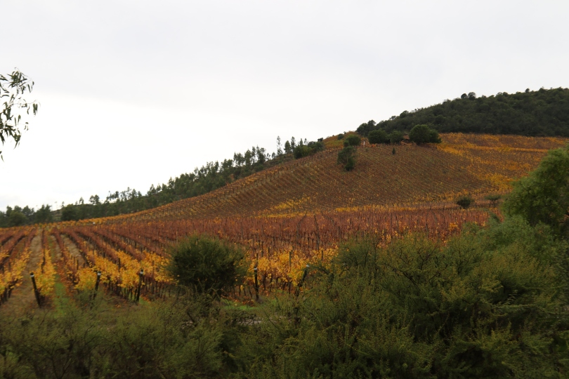Overlooking the vineyard at Polkura Wines in Colchagua Valley in Chile.