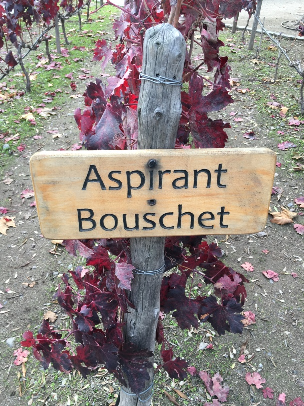 An Aspirant Bouschet sign on a tour of the Concha Y Toro winery in Chile.