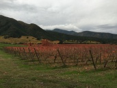 A view across the Montes Wines vineyard in Apalta in Chile.