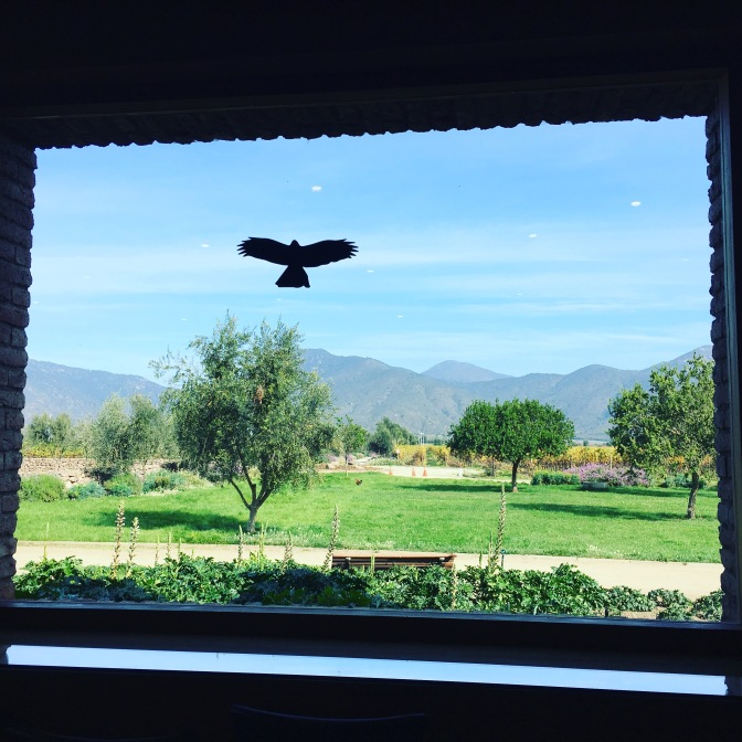 View from the cellar door at Emiliana in the Casablanca Valley in Chile.