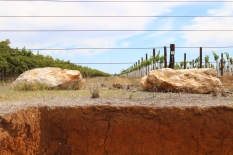 Soils and stone at the Wynns Coonawarra Estate in Australia.
